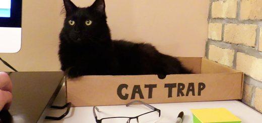 5つの痕跡ですぐに判明、仕事場に猫がいるかどうかが