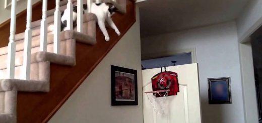 猫が決めるよバスケのシュート、ゴールを見下ろす高みから