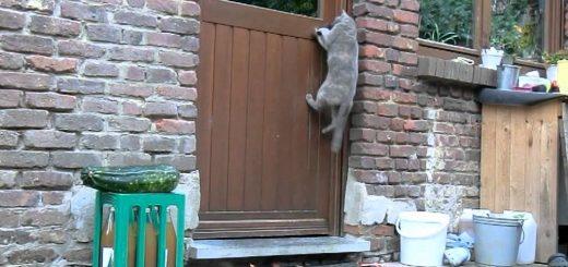 開けるのに扉を閉めなかった猫、ある一件でドアノッカーを覚える