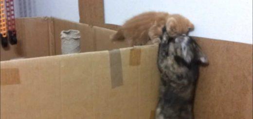 壁を乗り越え脱出する子猫、母ちゃんの胸へ軟着陸を決める