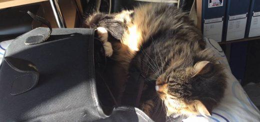 飼い主の静止も聞かず興奮する猫、カメラバッグに心を奪われ