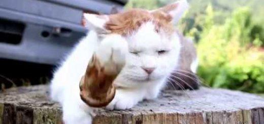 松茸を頭に載せた茶白猫、寝顔で伝える秋の訪れ