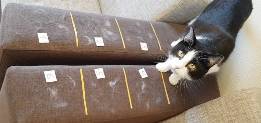 6つのうちのどれがベストか、ソファについた猫毛除去アイテム選手権