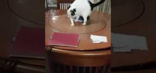 回転中のテーブル華麗に乗りこなす猫、意図せずリンゴをレッグスルー