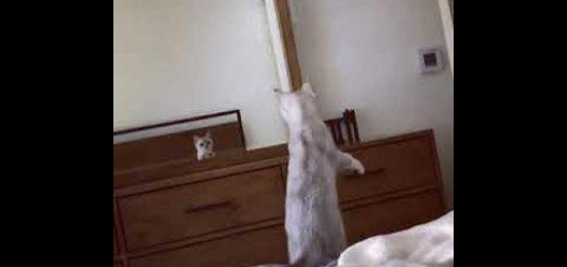 鏡に映る自分の姿に驚く猫、耳の実存を初めて確認