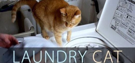 洗濯が始まる瞬間待ちわびる猫、空いたカゴがジェットコースターに