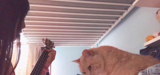 ウクレレの優しい音色に聞き惚れる猫、心地よすぎて睡眠態勢へ