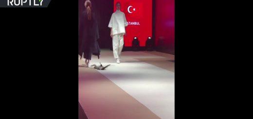 ファッションショーに猫が進入、モデル気取りでキャットウォークをキャットウォーク