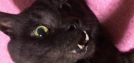黒猫撮影失敗防止に、写真ではなくスローモーションを