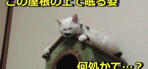 鼻黒の白猫寝そべる屋根の上、しっくりハマって何かを彷彿
