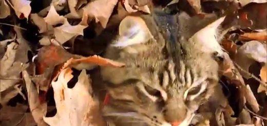 葉隠れの術を体得する猫、目を凝らしても居場所は分からず