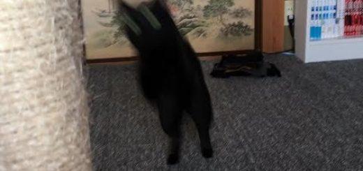 やっちゃう黒猫ポールに衝突、勢い余ってカメラにゴーン