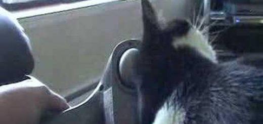 人間と暮らす猫への勤労感謝、電動叩きでご満悦