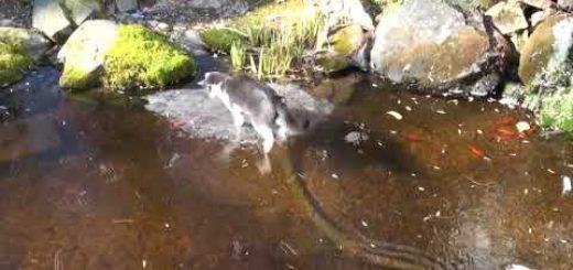 氷上を華麗に踊る白黒子猫、氷の下のお魚追って