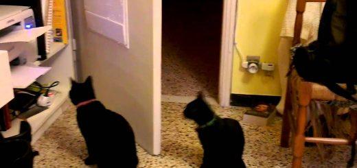 立ち上がる猫たち見つめて胸騒ぎ、プリント用紙に大興奮