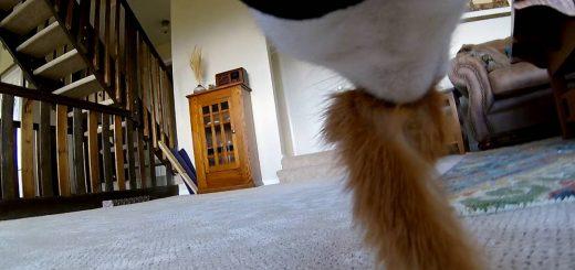 リアルな視線のキャッツアイ、同居猫も人もネズミもこう見える