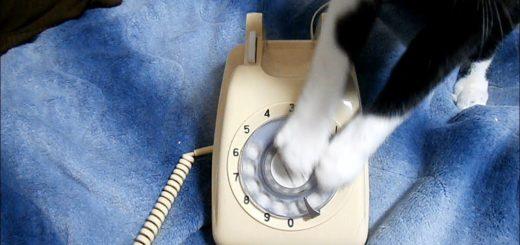 懐かしの電話に猫が大興奮、ダイヤル回せば猫のオモチャに