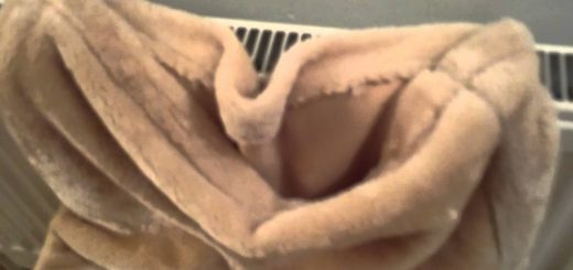 最高の寝床を見つけて雲隠れ、出てこない猫は温々眠る