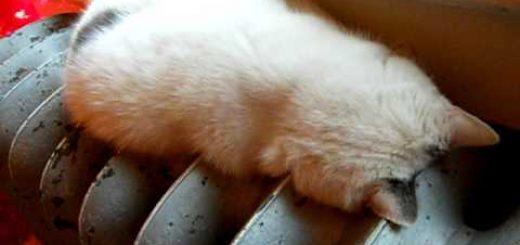 猫の体の流体具合、ラジエーターの凹みにピッタリ