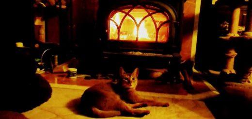 赤々と暖炉の炎に照らされる猫、火力の強さに心配な顔