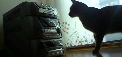懐かしのCDコンポと戦う猫、5CDチェンジャーに翻弄される