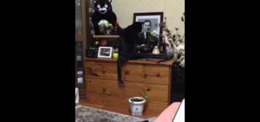 亡き人の遺影の前で鈴鳴らす猫、1度ならずと2度までも
