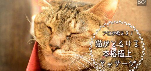 手から伝わる猫の温もり、人も癒やされる猫マッサージ