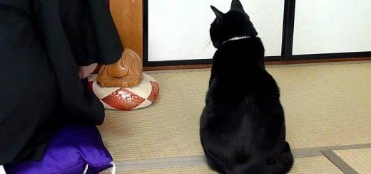 黒衣の僧の横で佇む黒き猫、木魚の音にも惑わず端座で