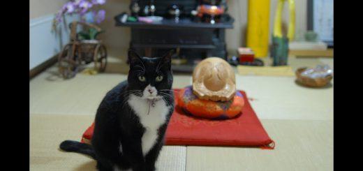 ポクポクと音の鳴る方寄り来る黒猫、木魚ではなく尻を叩けと