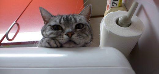 乾燥終わった余熱で快適、猫は食洗機の上で丸くなり