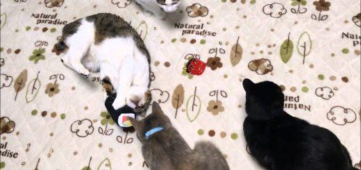 賞味期限問題のない恵方巻、抱き締める猫は独り占め
