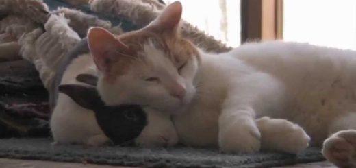 相棒のウサギを枕に昼寝する猫、スリスリしすぎて逃げられて