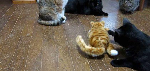 大声で笑い転げる猫を前に、テンション低めに困惑する猫たち