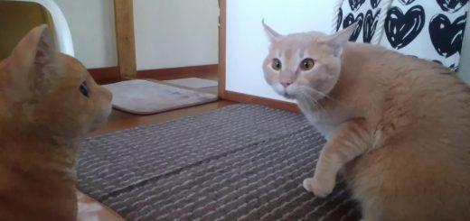 置物猫の無言の行に完敗する猫、気圧されわななき腰抜かす