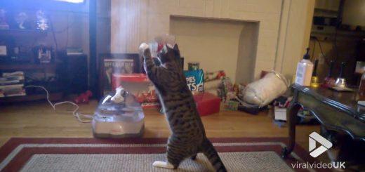 立ち上る蒸気を怪しみ掴もうと、猫は直立二本の脚で
