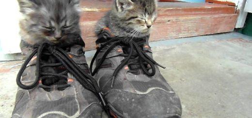 猫の兄弟そろってお昼寝、スニーカーの左と右と