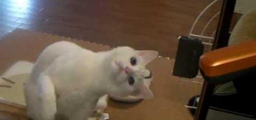 猫による低姿勢からの立ち退き要求、動かぬ相手に実力行使