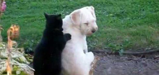 背中から伝わる温もりで通じ合い、黒猫さするよ白犬の背