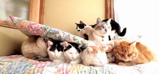 7匹で1匹支える猫サンド、社会保障の風刺動画みたいに