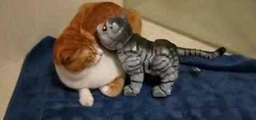 視線を逸らして固まる困惑顔の猫、ロボの子猫に詰められて