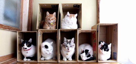 2階建て7部屋紙製猫ハウス、最後まで居座るのはどの部屋か