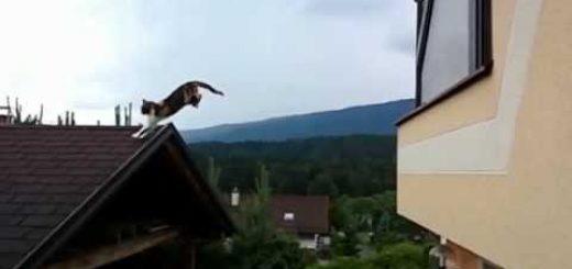 窓際から屋根へと三毛猫大ジャンプ、空に浮かぶよ美しき姿