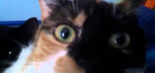 突然に迫るカメラに動じぬ猫、睦まじき様を世界に見せつけ