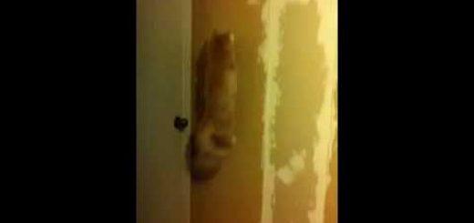 部屋の者すべてを闇へ誘う猫、漆黒に響く笑い声