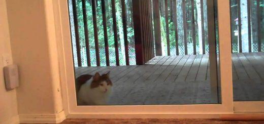 鳴き声も上げずに窓開ける猫、チャイムのメロディなぜかあの音
