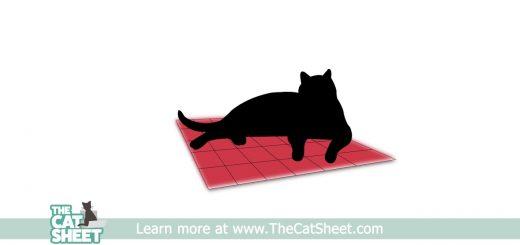 新聞紙以上のお昼寝の質を、猫が喜ぶ専用ゴロ寝シート