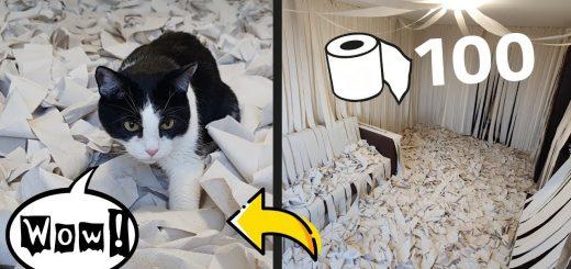 あの紙で部屋を満たせば猫はどうなる、欣喜雀躍大ハッスル
