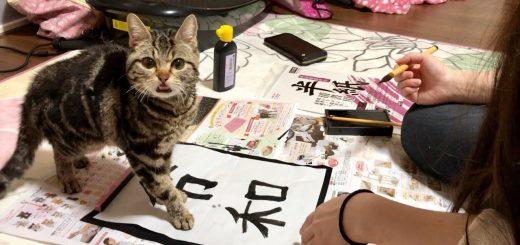 令和への仕上げを阻むアメショの子猫、最後はご飯で懐柔される