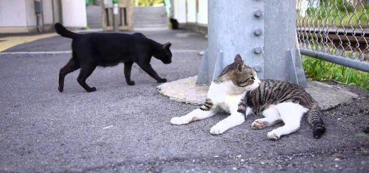 のんびりと静かに佇む昭和の猫、ゆるやかに流れる懐かしの時間
