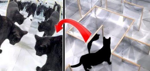 猫専用の鏡の迷路、アラフォーの心をなぜかくすぐる